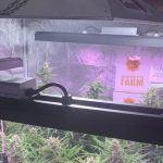12-Barney`s Farm y toni13: Automaticas I