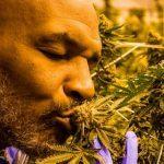 Empresa de cannabis de Mike Tyson podría patrocinar al Everton