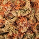 Cómo curar marihuana