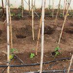 1-Amigos cultivandomedicina.com: Cultivo exterior 2021