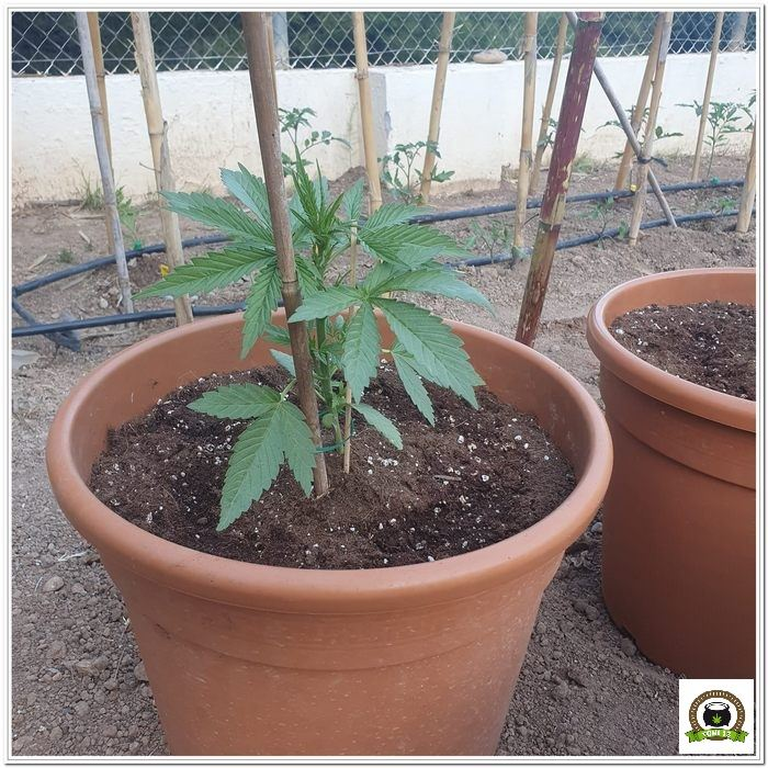 Cultivo exterior 2021