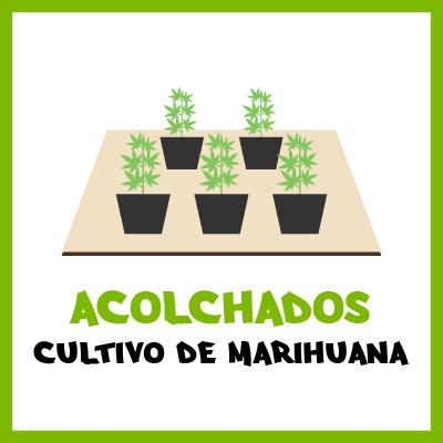 Acolchados en cultivo de marihuana. Por Toni13