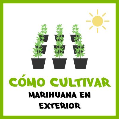 Cómo cultivar marihuana en exterior. Por Toni13