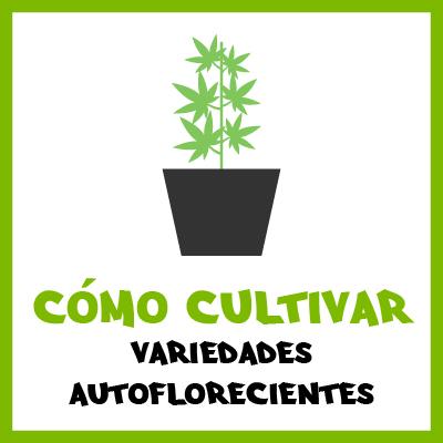 Cómo cultivar variedades autoflorecientes. Por Toni 13