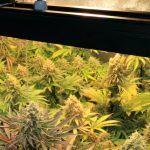 Nº 2 y Nº 4, las plantas tienen reservas. Actualización actual cultivo.