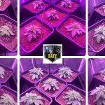 🌱 SCROG en armario de 1 metro cuadrado 5 plantas Bafy 💚 Primera parte